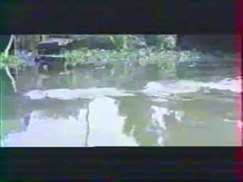 La fête au village : extrait vidéos du film Crocodile Fury
