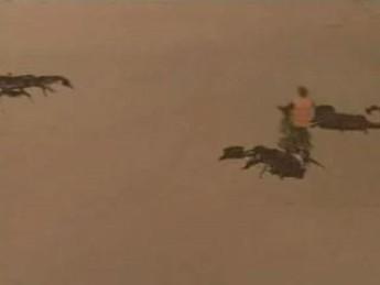 De gros scorpions : extrait vidéos du film Les Survivants de la Fin du Monde