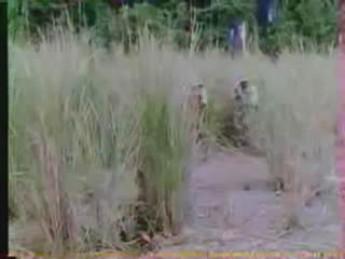 Strike à coup de pompe : extrait vidéos du film Commando Massacre