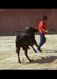 Pendant ce temps, Bruce s'amuse avec un taureau...